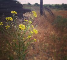 Close up of Yellow Wildflowers  by JULIENICOLEWEBB