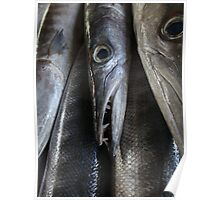 Barracouta in Fish Market in Seychelles Poster