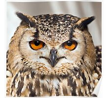 Bengal Eagle Owl (Bubo bengalensis) Poster