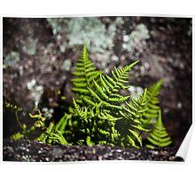 Fern and Granite - Thuya Garden Poster