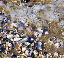 Beach Baubles and Foam  by Lynda Lehmann
