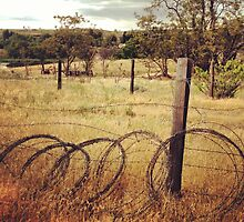 Barbwire Fence Line Outlining Fields of Gold by JULIENICOLEWEBB