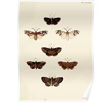 Exotic butterflies of the three parts of the world Pieter Cramer and Caspar Stoll 1782 V4 0231 Poster