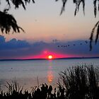 Dragonfly Sunset on Lake Apopka by chadc11