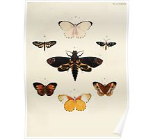Exotic butterflies of the three parts of the world Pieter Cramer and Caspar Stoll 1782 V3 0171 Poster