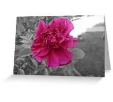 Rose in Selective Color Greeting Card