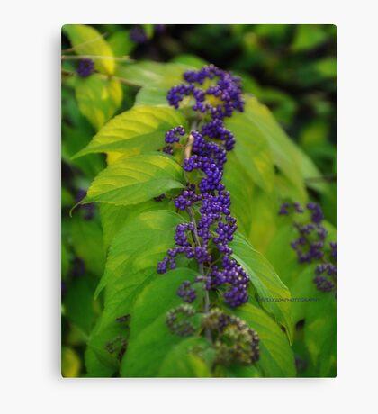 Tiny purple berries Canvas Print
