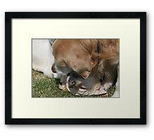 Doggie Love! Framed Print