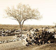 Mesquite by Judi FitzPatrick