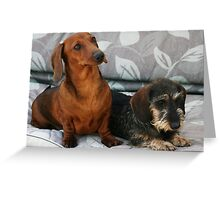 Mini smooth and mini wire dachshund friends Greeting Card