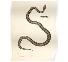 Leopold Joseph Fitzinger 1867 0117 Picture Atlas for popular scientific natural history of vertebrates Poster