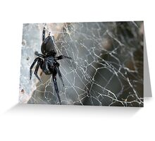 Australian black house spider on the web Greeting Card