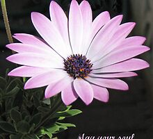 Bereavement Card featuring Cape Daisy by BlueMoonRose