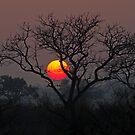 Sunset At Londolozi by Michael  Moss