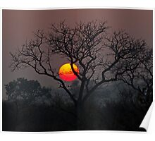 Sunset At Londolozi Poster