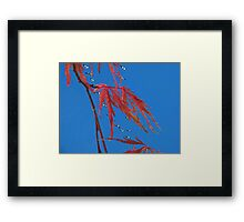 The Snow Geese Are Here Framed Print