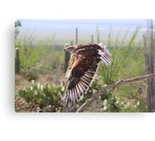 """Angel wings"" Ferruginous Hawk Canvas Print"