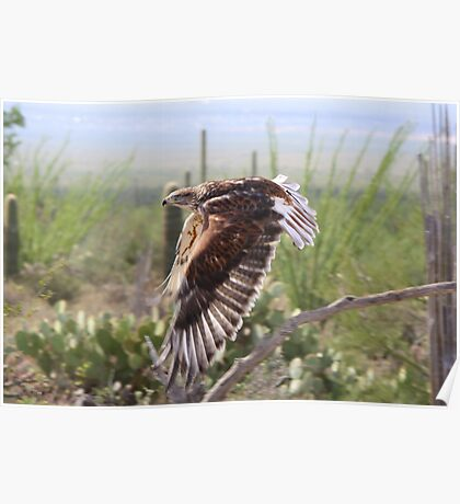 """Angel wings"" Ferruginous Hawk Poster"