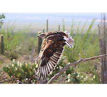 """Angel wings"" Ferruginous Hawk Photographic Print"