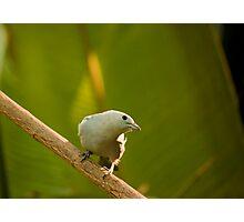 Am Bird! Photographic Print