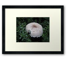 Who Took a Bite? Framed Print