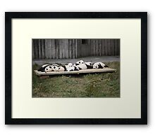 A Platter Of Pandas Framed Print