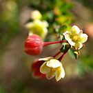 Serpentine Forest Plants Series - Unknown Tiny by kalaryder