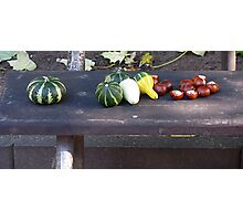 Still Life on a Bench Photographic Print