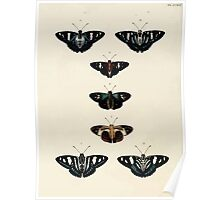 Exotic butterflies of the three parts of the world Pieter Cramer and Caspar Stoll 1782 V3 0200 Poster