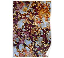 Soft coral abstract Poster