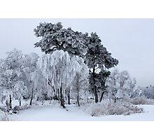 Silken painting - winter Photographic Print