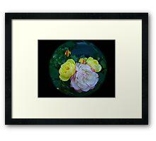 Roses through tele  lens Framed Print