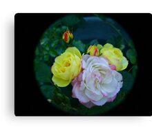 Roses through tele  lens Canvas Print