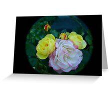 Roses through tele  lens Greeting Card