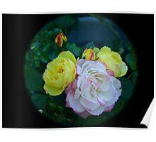Roses through tele  lens Poster