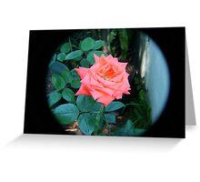 orange rose through tele lens Greeting Card
