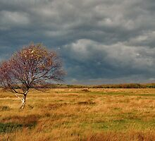 Autumn on the dune polder by Adri  Padmos