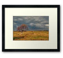 Autumn on the dune polder Framed Print