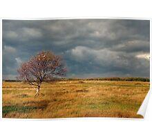 Autumn on the dune polder Poster