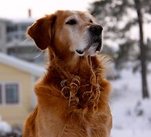 Golden dogs by LadyFi