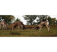 the fighting deer  Photographic Print
