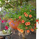 Hanging basket of colour - cropped. by joycee