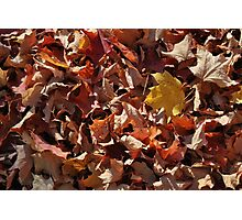 Colourful Fallen Leaves Photographic Print