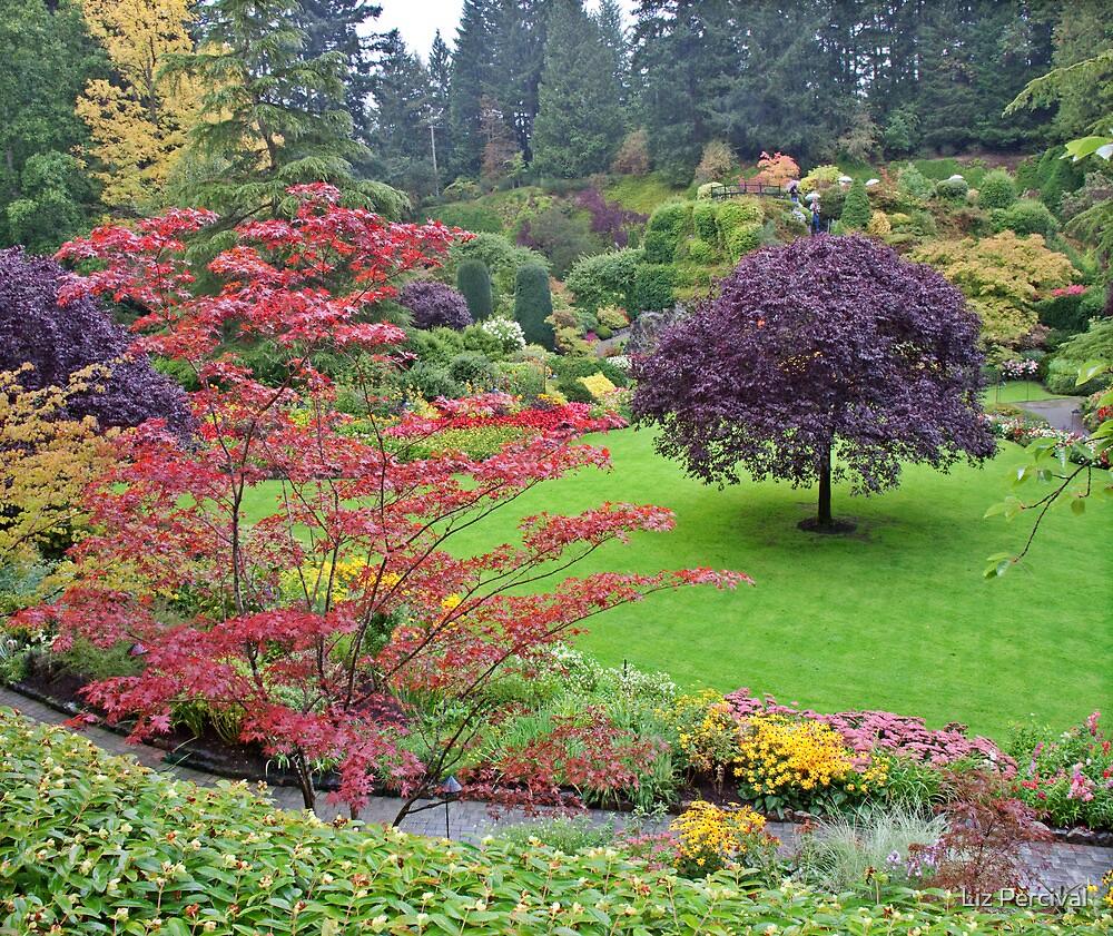 The Garden by Liz Percival