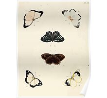 Exotic butterflies of the three parts of the world Pieter Cramer and Caspar Stoll 1782 V2 0056 Poster