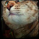 Cat Magic...  by Louise LeGresley