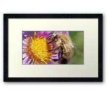 Bumble Bee 1 - Macro Framed Print