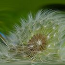 Abstract Dandelion by Brian Roscorla