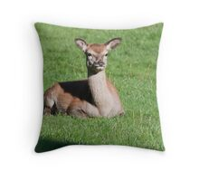 *YOUNG DOE* Red deer Throw Pillow
