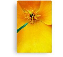 California Golden Poppy Canvas Print